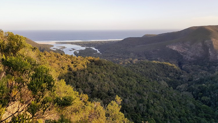 South Africa 8